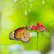 verde · dourado · erros · europeu · verão · azul - foto stock © smuay