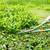ножницы · работник · зеленый · весны · природы - Сток-фото © smuay