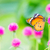 Plain tiger butterfly stock photo © smuay