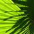 palm leaf stock photo © smuay