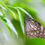 amarelo · vítreo · tigre · borboleta - foto stock © smuay