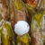 balle · de · golf · coincé · Palm · semis · sale - photo stock © smuay