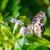 zseniális · pillangó · etetés · virágok · kert · virág - stock fotó © smuay