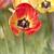 friss · tulipánok · nyár · nap · virágok · boldog - stock fotó © sognolucido