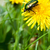 カブトムシ · 黄色の花 · 赤 · ベルベット · 黄色 - ストックフォト © sognolucido