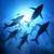 okyanus · etrafında · üzerinde · su · yüzeyi · izlerken · yaban · hayatı - stok fotoğraf © solarseven
