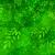 зеленые · листья · дерево · вектора · акварель · лет - Сток-фото © sonya_illustrations