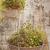 vintage · floral · impresión · imagen · jardín · colgante - foto stock © sophie_mcaulay