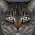 kat · gezicht · afbeelding · huis · focus - stockfoto © sophie_mcaulay