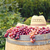 grape picking stock photo © sophie_mcaulay