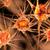 hücre · 3D · render · örnek · doğal · kaba - stok fotoğraf © spectral