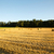 stro · zomer · landbouwer · veld · natuur - stockfoto © spectral