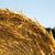 agricultor · heno · negocios · primavera · fondo · blanco - foto stock © spectral