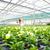 小さな · 植木屋 · 作業 · 植物 · 温室 · 濃縮された - ストックフォト © spectral