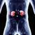 3D · prestados · ilustração · masculino · corpo · azul - foto stock © spectral
