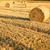 saman · buğday · çiftçi · alan · yaz - stok fotoğraf © spectral