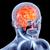 内部 · 脳 · 人間の脳 · 3D · レンダリング - ストックフォト © spectral