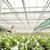 serra · alimentare · natura · giardino · farm - foto d'archivio © spectral