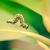 kert · hernyó · pillangó · erdő · levél · háttér - stock fotó © Sportactive