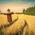 épouvantail · automne · nature · domaine · ferme · laisse - photo stock © sportactive