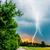 vihar · villám · fák · felső · minőség · fotó - stock fotó © Sportactive