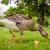liba · keres · étel · park · narancs · madár - stock fotó © Sportactive