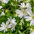 vadvirágok · természet · fehér · zöld · kert · fű - stock fotó © Sportactive