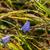 kék · virág · harmat · magas · döntés · fotó - stock fotó © Sportactive