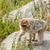 majom · eszik · magas · döntés · fotó · legjobb - stock fotó © Sportactive