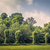 Trees on a row on a field stock photo © Sportactive