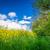 fiori · coltivato · agricola · campo · protezione - foto d'archivio © sportactive