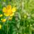 virág · zöld · természet · citromsárga · természetes · fű - stock fotó © Sportactive