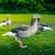 yeni · evliler · poz · yeşil · çim · park · ortalama - stok fotoğraf © sportactive