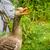 liba · mutat · fogak · szürke · zöld · természet - stock fotó © Sportactive