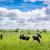 tehenek · mező · zöld · nyár · tájkép · tehén - stock fotó © Sportactive