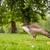 fiatal · liba · néz · étel · park · narancs - stock fotó © Sportactive