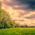 fák · felhős · tájkép · mező · sötét · vihar - stock fotó © Sportactive