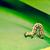 lagarta · folha · verde · textura · abstrato · luz · projeto - foto stock © sportactive