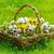 bloemen · tuin · voorjaar · natuur · blad · groene - stockfoto © srnr