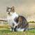 cat stock photo © srnr