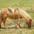 little red pony stock photo © srnr
