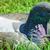 портрет · голубь · ленивый · Постоянный · тень · полдень - Сток-фото © srnr