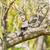 природы · филиала · небе · дерево · весны · трава - Сток-фото © srnr