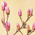 開花 · ピンク · 花 · 支店 - ストックフォト © srnr