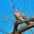 древесины · голубь · лес · природы · области · зеленый - Сток-фото © srnr