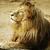 лев · царя · природы · набор · кошки - Сток-фото © srnr