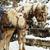christmas horses stock photo © srnr