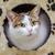 kedi · oturma · gölge · çalı · Hawaii · ABD - stok fotoğraf © srnr