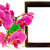 belo · rosa · orquídea · flor · isolado · branco - foto stock © srnr