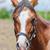 portrait of a horse stock photo © srnr